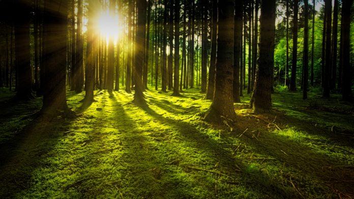 Stressbewältigung - Sonnige Lichtung im Wald