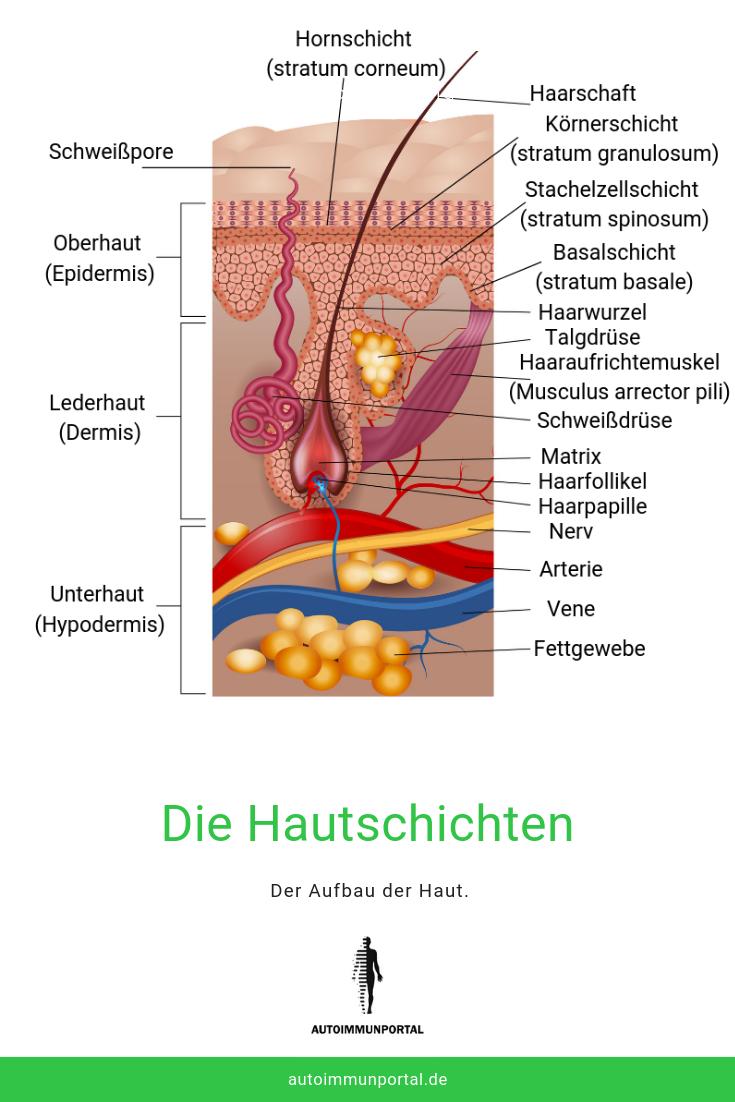 Neurodermitis, Haut, Aufbau, Hautschichten