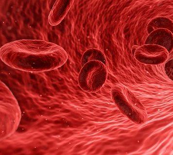 Was ist Antiphospholipid-Syndrom - Rote Blutkörperchen Erythrozyten in der Blutbahn