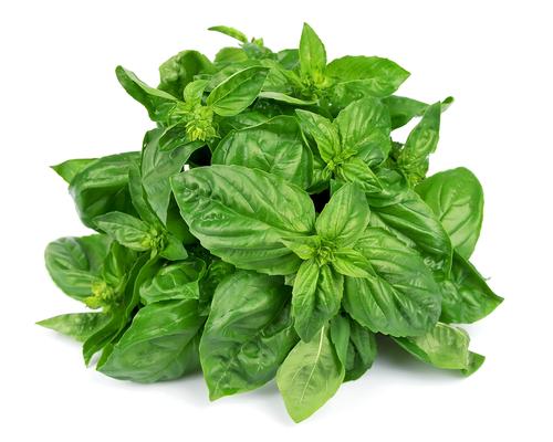 Kräuter, Kraut, Basilikum, Heilkräuter, Pflanze