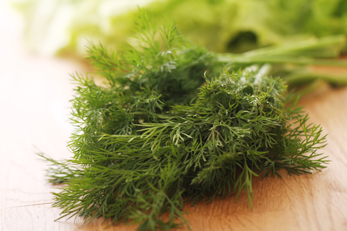 Kräuter, Dill, Heilkräuter, Pflanze