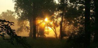 So wichtig ist die Sonne für Ihre Gesundheit, Sonnenlicht, Licht