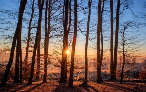 Studie belegt: Blauer Anteil im Sonnenlicht beeinflusst Immunsystem