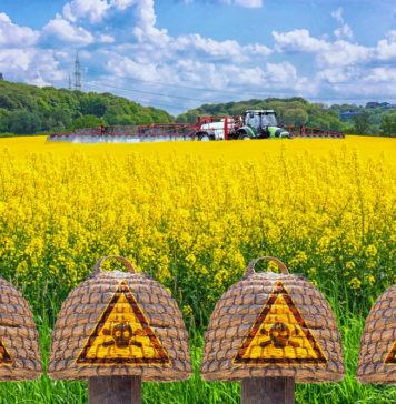 Glyphosat, Bienen, Bienensterben, Ursache