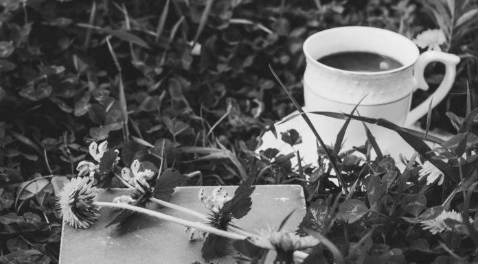Löwenzahn Chicorée Kaffee