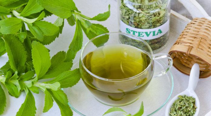 Stevia, Borreliose