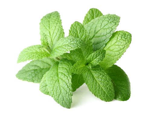 Kräuter-Pfefferminze-Heilkräuter-Pflanze
