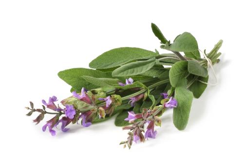 Kräuter-Salbei-Heilkräuter-Pflanze