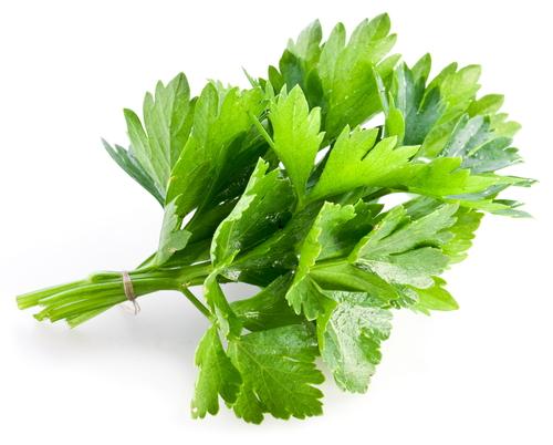 Kräuter-Koriander-Heilkräuter-Pflanze