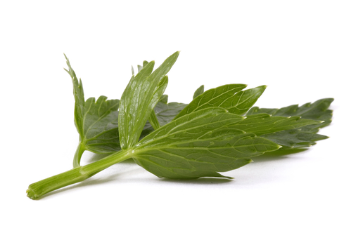 Kräuter-Liebstöckel-Liebstöckl-Heilkräuter-Pflanze