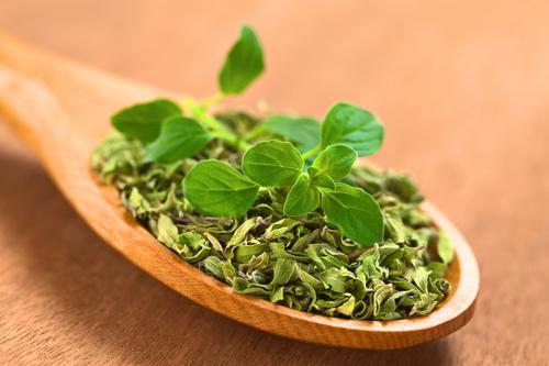 Kräuter-Oregano-Heilkräuter-Pflanze