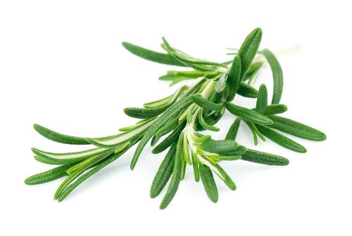 Kräuter-Rosmarin-Heilkräuter-Pflanze