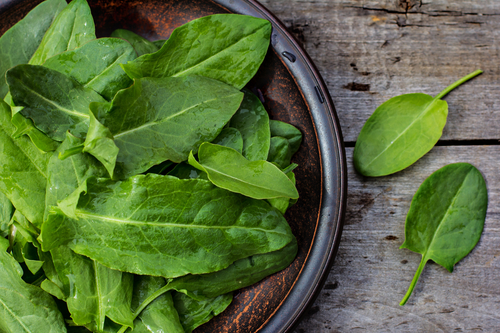 Kräuter-Sauerampfer-Heilkräuter-Pflanze