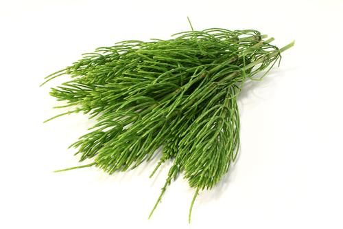 Kräuter-Zinnkraut-Heilkräuter-Pflanze