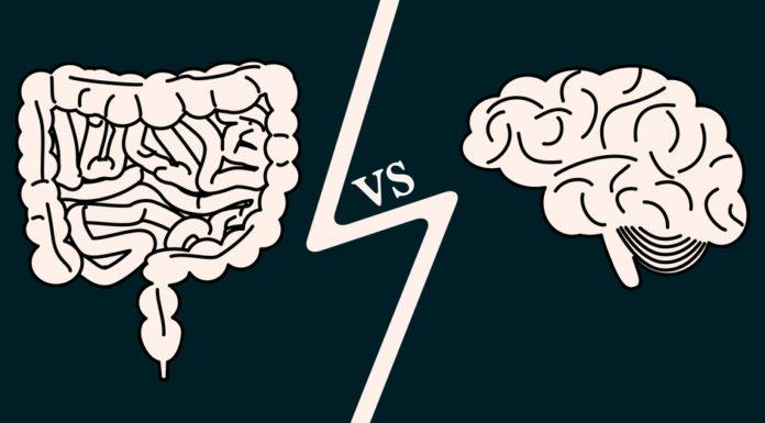 Darm und Gehirn Wechselspiel mit Folgen für das Immunsystem