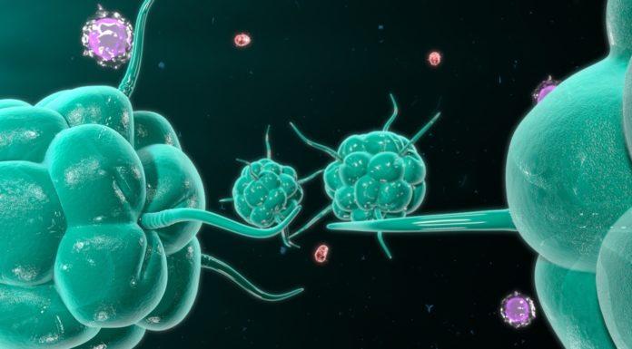 Darmbakterien, Immunsystem